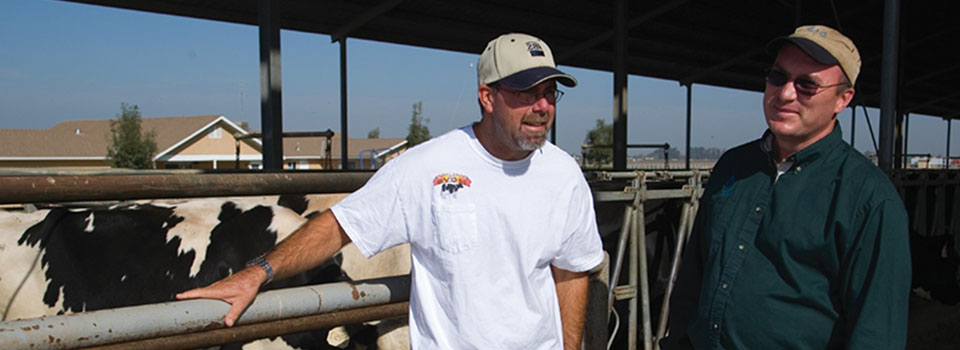 Farmers talking near cows in barn -Photo courtesy of USDA Natural Resources Conservation Service