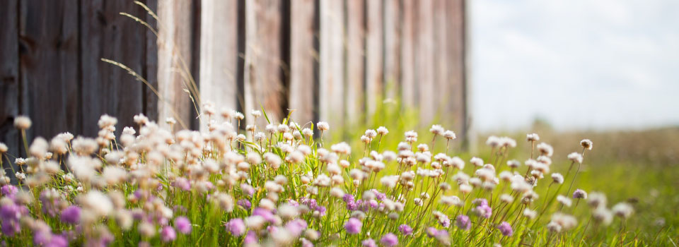 Homepage-slider-spring-flowers-barn-background