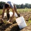 potato-farmer-cropped