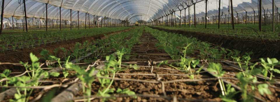 seedling-flower-plants-greenhouse-byProFlowers